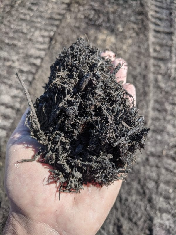 black mulch in hand for scale and detail
