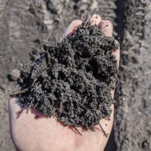 dark topsoil in hand for scale